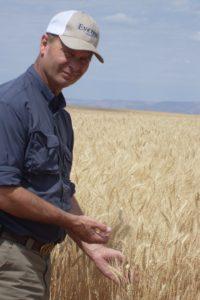Wheat gluten farmer