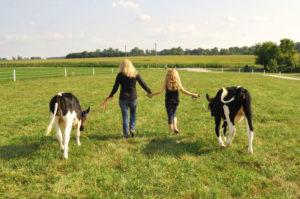 cow-field-michele-payn