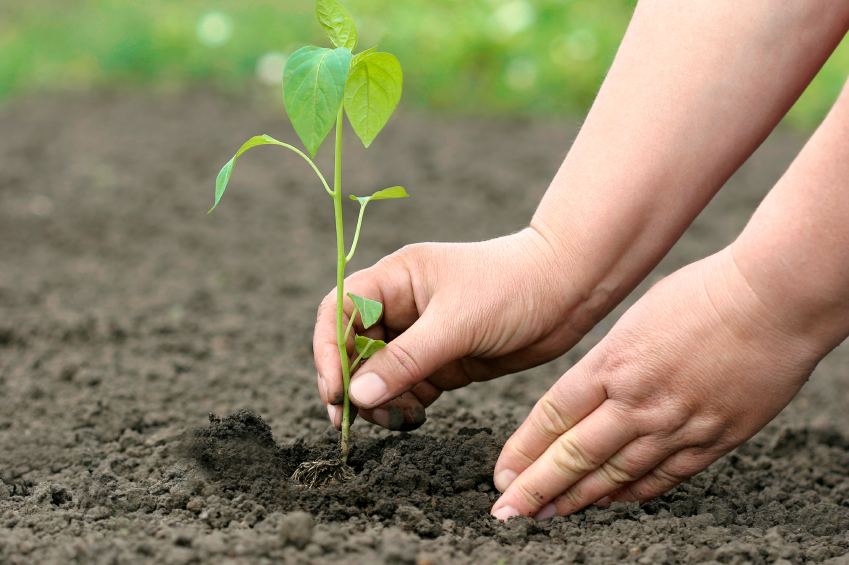 http://causematters.com/wp-content/uploads/planting-new-life1.jpg
